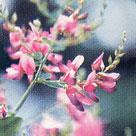 はぎ ◆ 柔らかな心、誠実