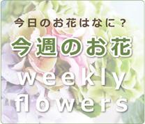 今日のお花はなに? 今週のお花 weekly flowers